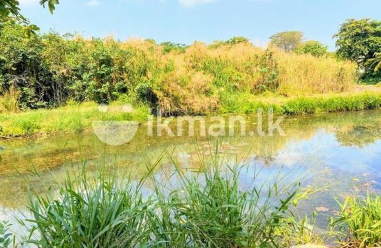 8.Water Front 6.5 P Bare Land Sale at Nawala