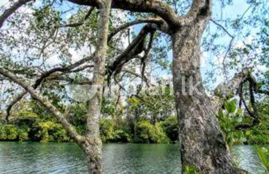 Water Front 50 Acre Land Sale At Bentota